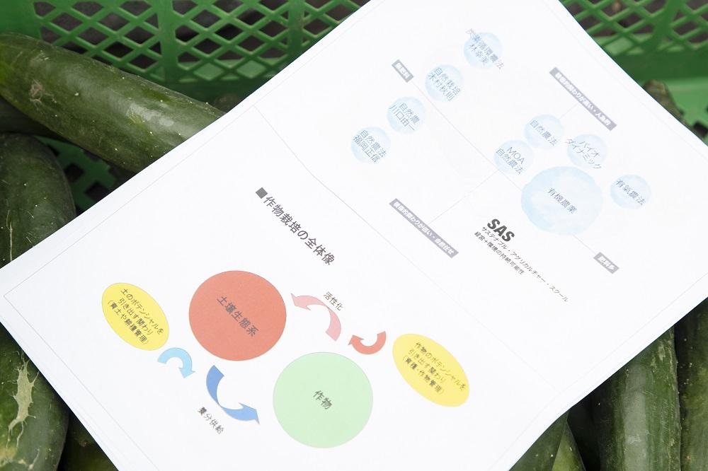 Shirado-san chart 2